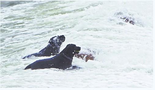 两只黑狗青岛音乐广场海中冲浪